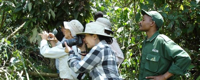 Ecoturismo con gorilas de Montaña