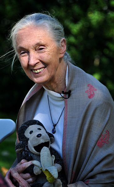 Jane Goodall by Nick Step CC Some rights reserved