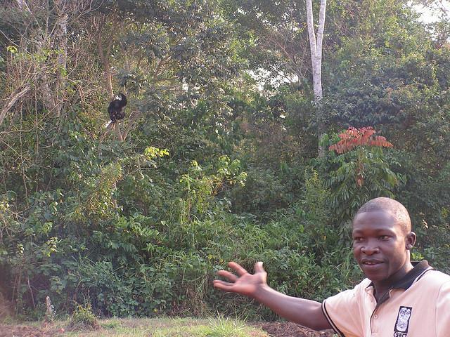 Los humanos y el ecoturismo pueden suponer un riesgo para chimpancés by Darwin Initiative CC Some rights reserved