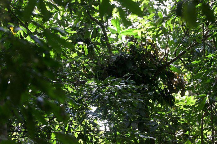 Nido de chimpacé por Joey Verge CC Some rights reserved