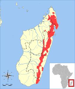 Microcebus_rufus_range_map.svg
