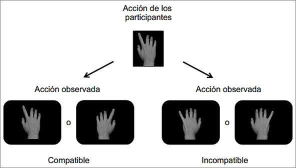Figura 1. Esquema de la secuencia de acciones realizadas por ambos grupos de estudio. Imagen extraída del artículo de F. Bunlon et al. 2015, p.7.
