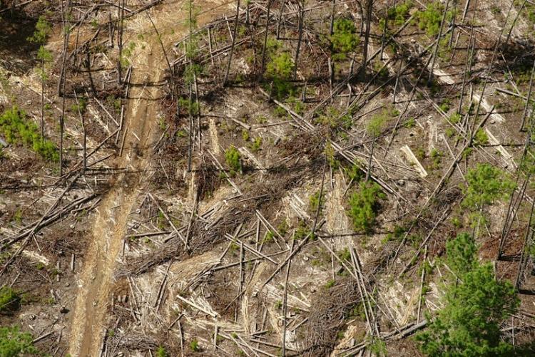 1_Deforestación