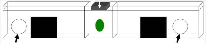Fig. 2. Caja vista desde la perspectiva de los simios.