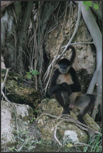 Salomon: the loveliest, craziest spider monkey ever.