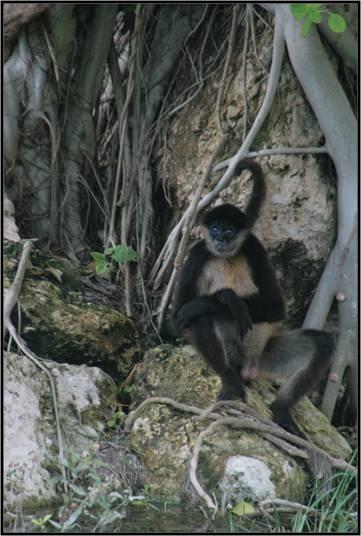 Salomon: el mono araña más encantador y loco para Federica.
