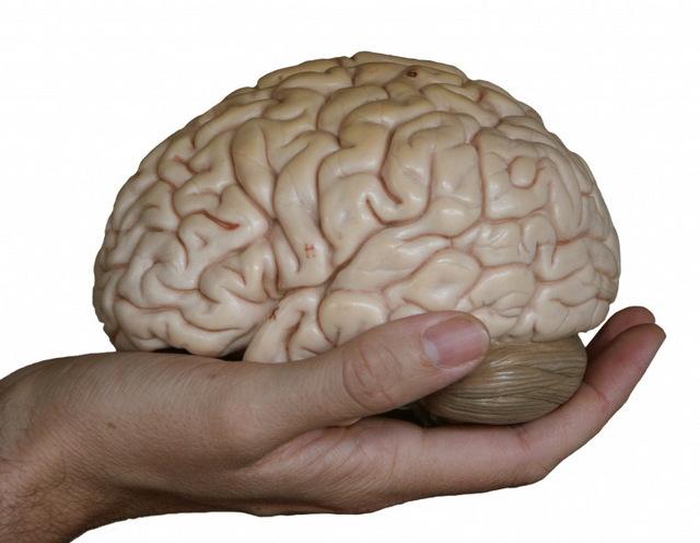 hand-holding-brains