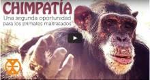 chimpatía
