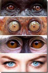 Detalle posición frontal de los ojos en Primates