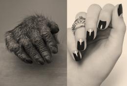 Detalle de uñas en Primates
