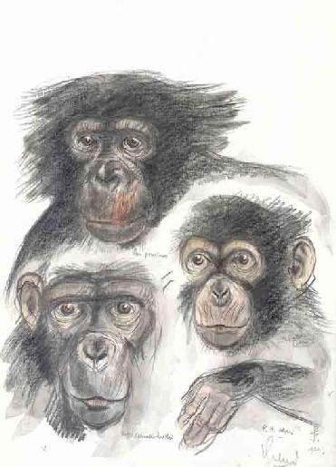 primats