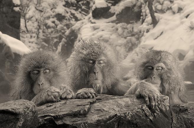 Sólo el animal humano es cultural? – Máster en Primatología