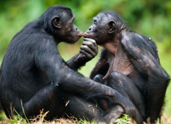 Muestras de afecto entre dos primates