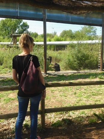 Suani Armisen, Coordinadora Académica del Máster en Primatología
