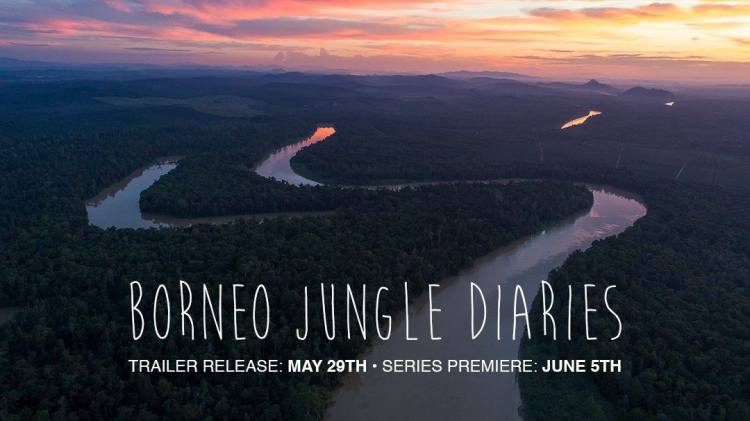 Borneo Jungle Diaries