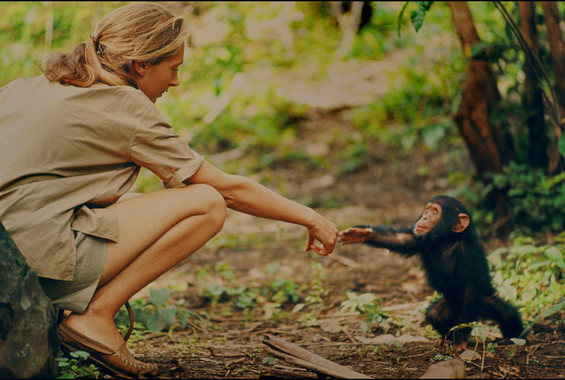 Jane-una-primatologa-universal_image_380